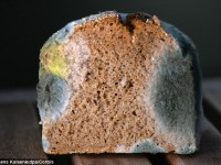 How Mouldy Bread could charge up your Phone